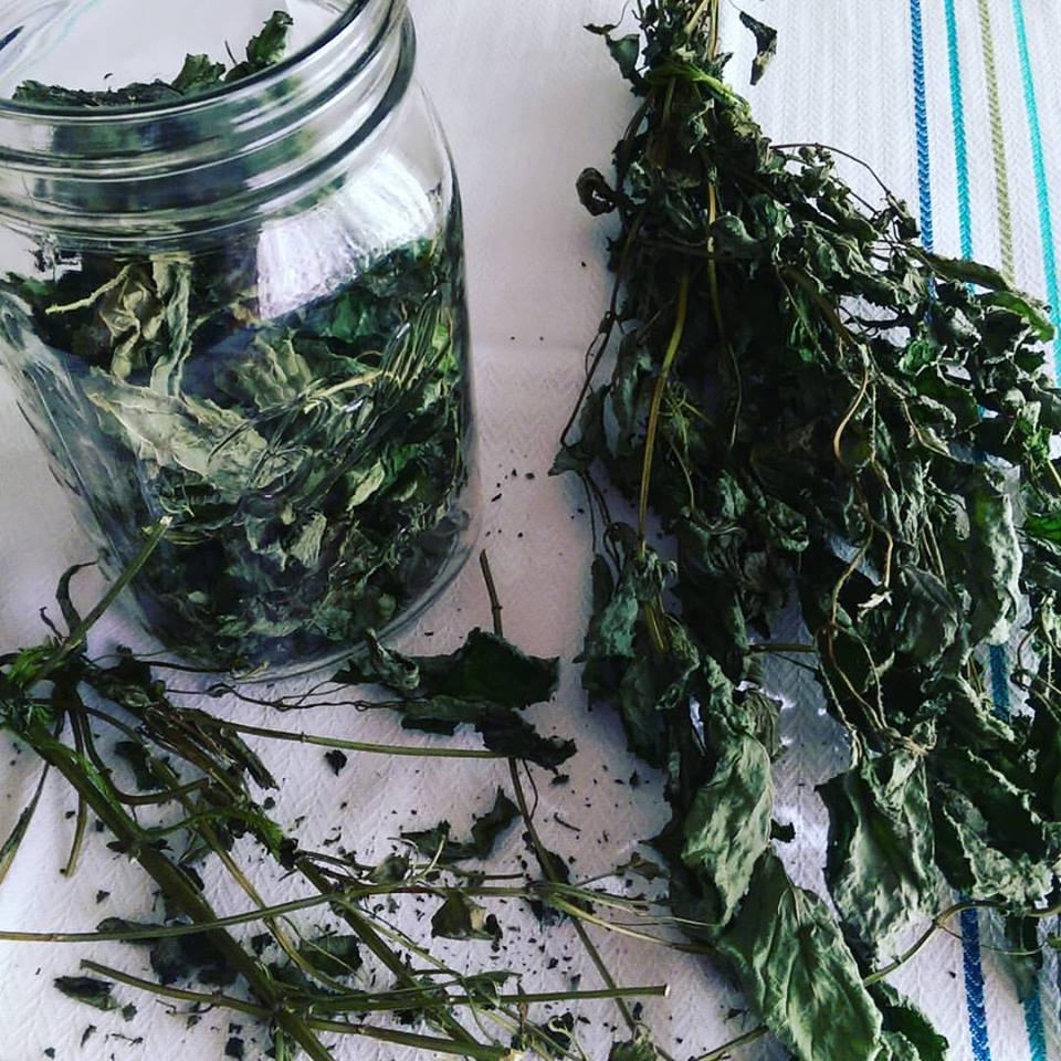 lemon-balm-tea-dried-leaves