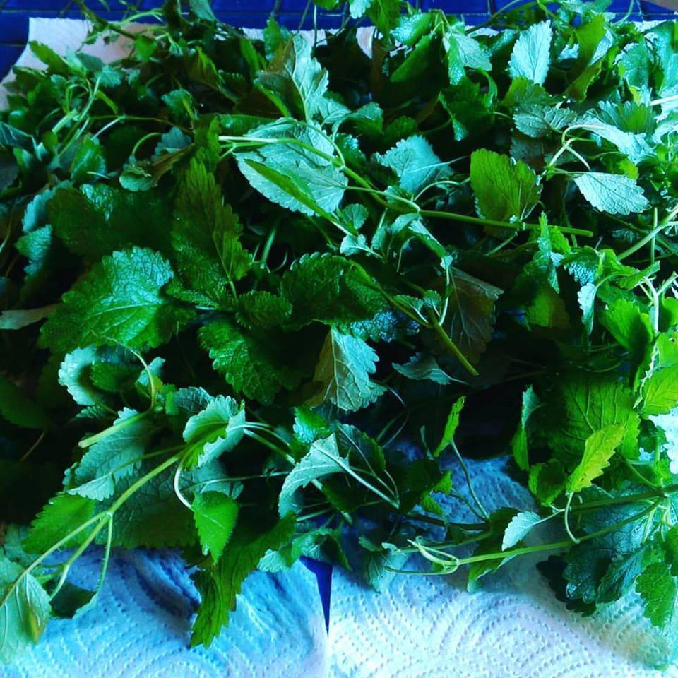 lemon-balm-tea-leaves